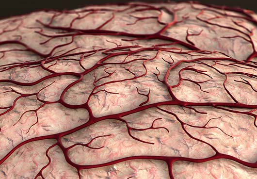 Increase blood flow to the brain by chewing.