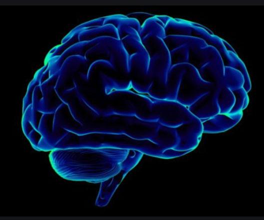 Tugga och bli snabbtänkt i hjärnan. Undersökningar visar att tuggande förkortar reaktionstiden märkbart.