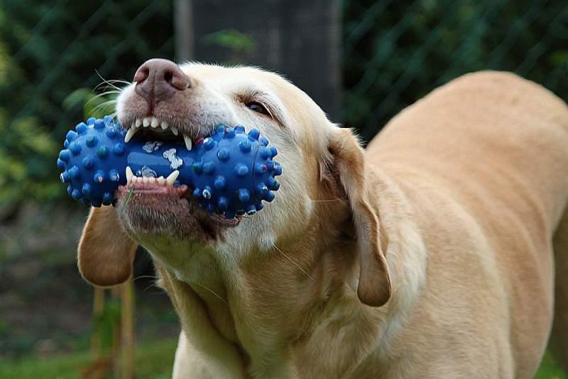 Hundar använder också käkarna för att hantera känslor